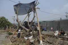 planting a well grown tree Kereta Api Ambarawa Rly Museum
