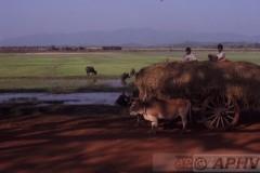 aphv-1200-030222-myanmar-yc629-nabij-mokpalin-water-buffel-en-ossenkar-22-2-2003