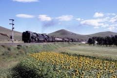 aphv-251-040830-galadesitai-2x-qj7112-7137-departing-train-18012-up-hill-ji-tong-rly--jing-peng-pass-with-sunflowers04