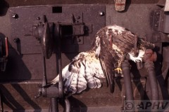 aphv-619-db-rosslau-elbe-stootvogel-buizerd-op-stuurstand--9-11-2003